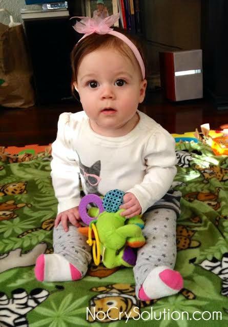 Maple, 7 months